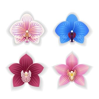 Satz von orchideenblüten.