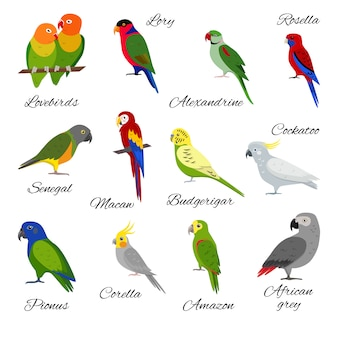 Satz von papagei