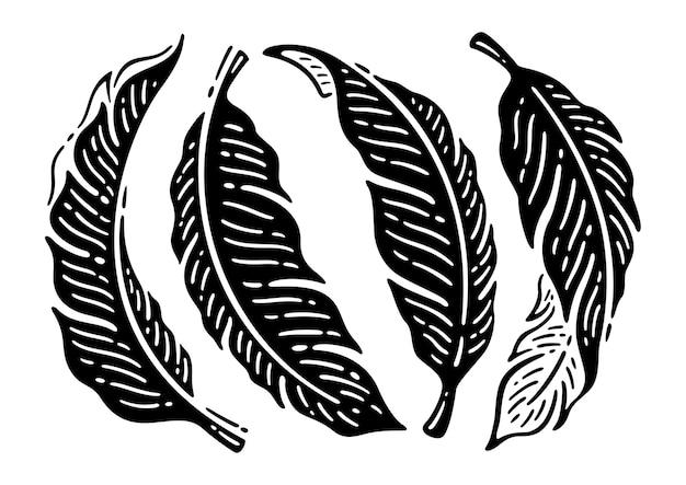 Satz von silhouette tropischen bananenblättern