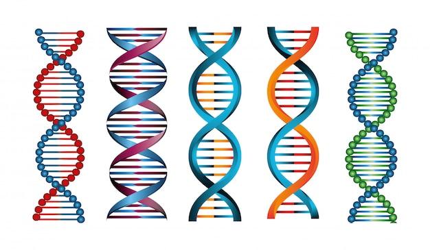 Satz von strukturen desoxyribonukleinsäure