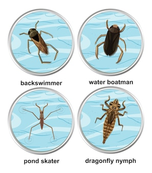 Satz von verschiedenen arten von wasserinsekten