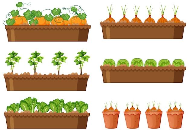 Satz von verschiedenen gemüsepflanzen in verschiedenen töpfen isoliert