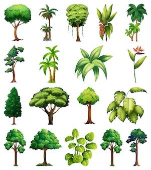 Satz von verschiedenen pflanzen und bäumen