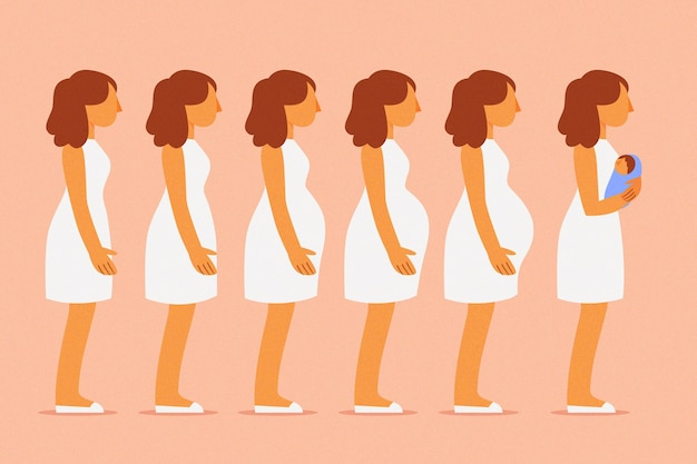 Satz von verschiedenen schwangerschaftsstadien