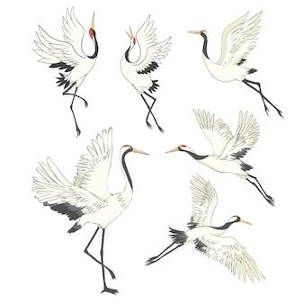 Satz von vögeln. kranich, storch, reiher.