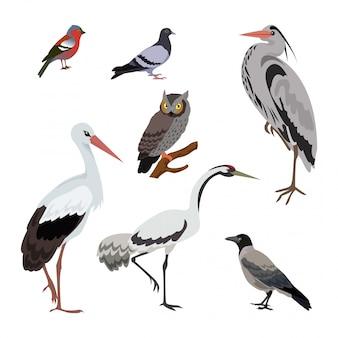 Satz von vögeln