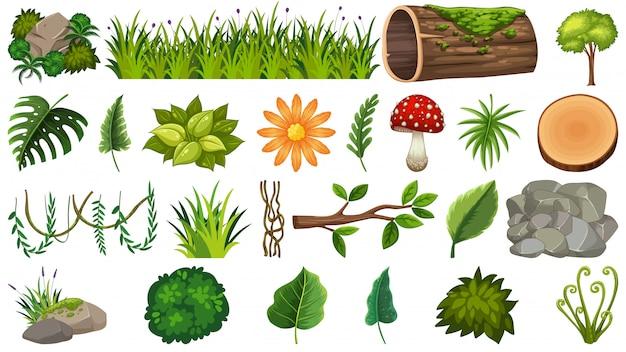 Satz von zierpflanzen