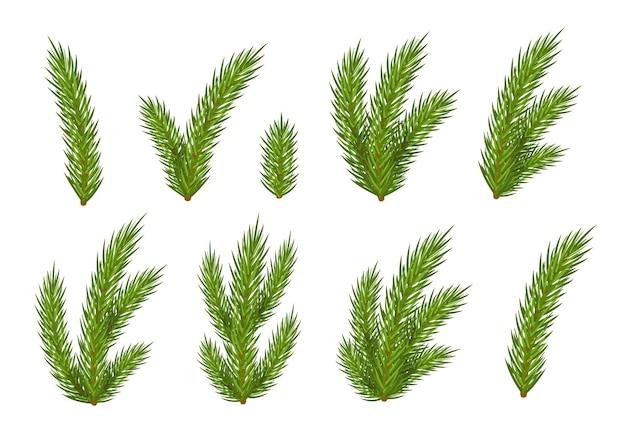 Satz weihnachtstannenzweige für das design lokalisiert auf weißem hintergrund