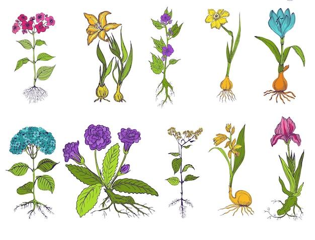 Satz weinleseblumen handgezeichnet