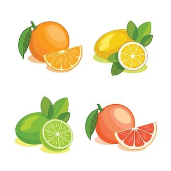 Satz zitrusfrüchte. illustration.