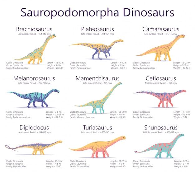 Sauropodomorpha-dinosaurier. bunte illustration von dinosauriern lokalisiert auf weißem hintergrund. satz alter kreaturen mit informationen über größe, gewicht, klassifizierung und lebenszeit.