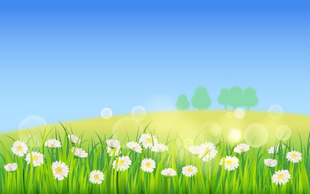 Schablonenhintergrund frühlingsfeld von blumen von gänseblümchen und von grünem saftigem gras