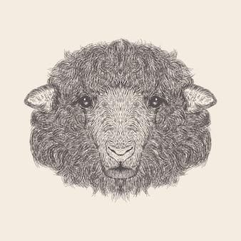 Schaf-illustration, hand gezeichnetes design.
