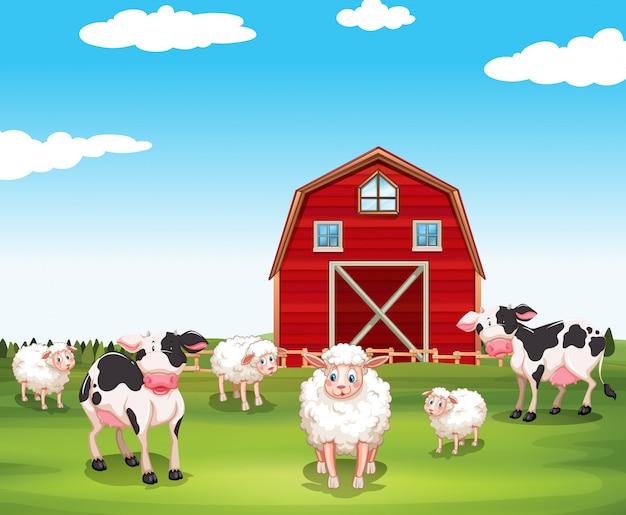 Schafe und kühe auf dem bauernhof