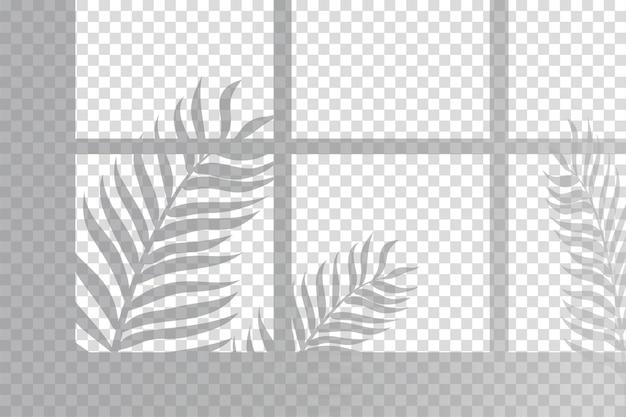 Schatten der farnblätter überlagern effekt