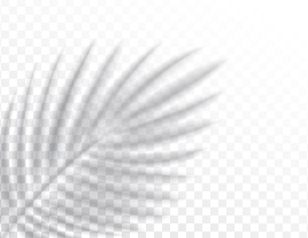 Schatten des blattes der pflanzen auf überlagerungseffekten