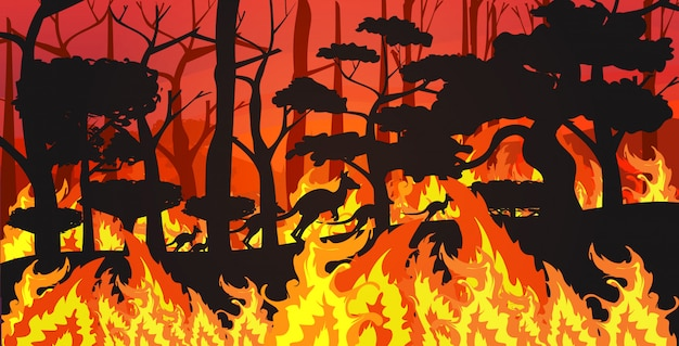 Schattenbilder von den kängurus, die von den waldbränden in australien-tieren sterben in den intensiven orange horizontalen flammen des waldbrand-brennenden naturkatastrophenkonzeptes der bäume sterben