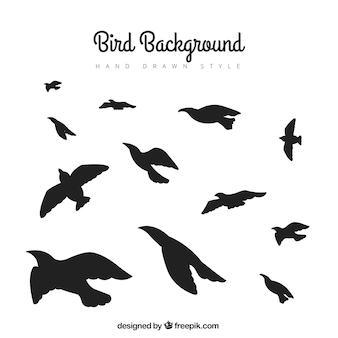 Schattenbildfliegen-vogelhintergrund