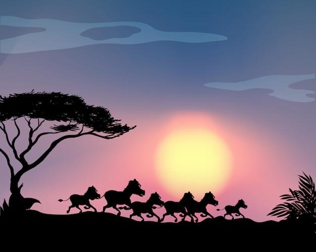 Schattenbildpferde, die auf dem gebiet laufen