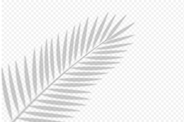 Schattenüberlagerung von palmblatt