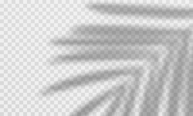 Schattenüberlagerungseffekt. transparente palmblattauflage