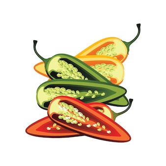 Scheiben roh jalapeno pfeffer. vektor-illustration