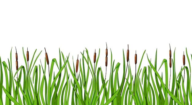 Schilf und grünes gras nahtlose hintergrund auf einem weißen hintergrund isoliert. vektorillustration für die gestaltung der landschaft.