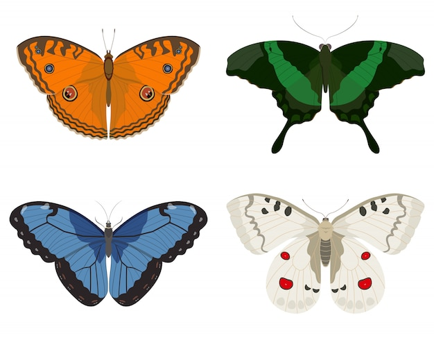 Schmetterlinge verschiedener arten. satz schöne insekten.