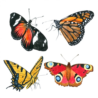 Schmetterlingsaquarellsammlung hand gezeichnet gemalt