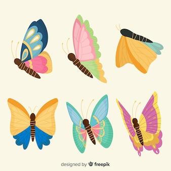 Schmetterlingssammlung