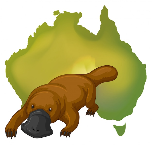 Schnabeltier und australien karte
