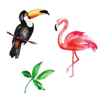 Schöne aquarell-tropische vogel-sammlung