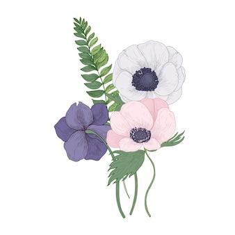 Schöne blühende blumen und blätter der schönen anemone lokalisiert auf weißem hintergrund.