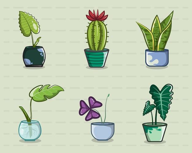 Schöne coole zierpflanzen zum dekorieren des zimmers des hauses, logo, poster, hintergrund