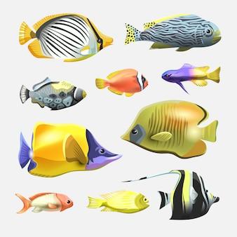 Schöne fischsammlung des meeres lokalisiert auf weißem hintergrund. flacher designfisch. illustration, fische. fischsammlung. aquarium moderne plattfische. satz aquarienfische.