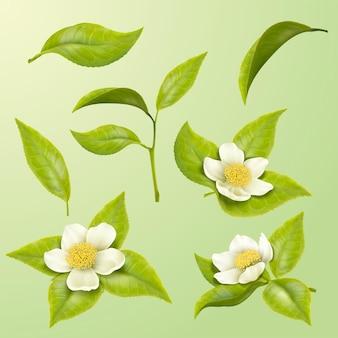 Schöne grüne teeblätter und blüten in 3d-darstellung