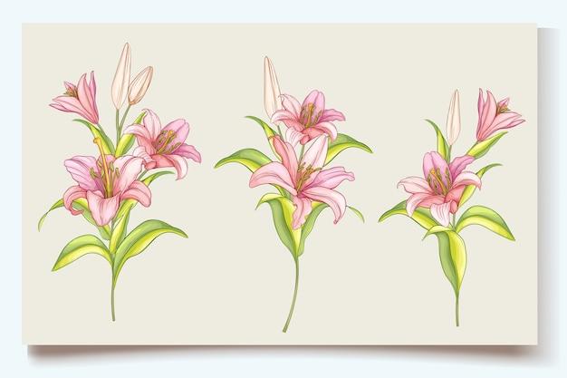 Schöne handgezeichnete lilie blüht illustration