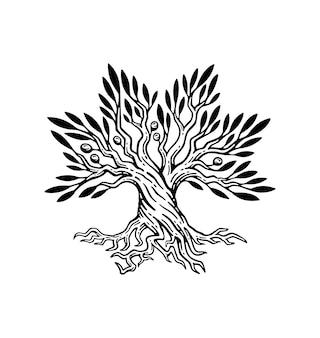 Schöne illustration des olivenbaum- und wurzellogos im weinlesestil