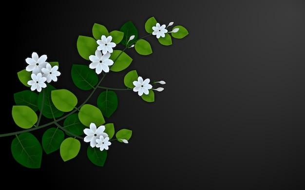 Schöne jasminblume auf schwarzem