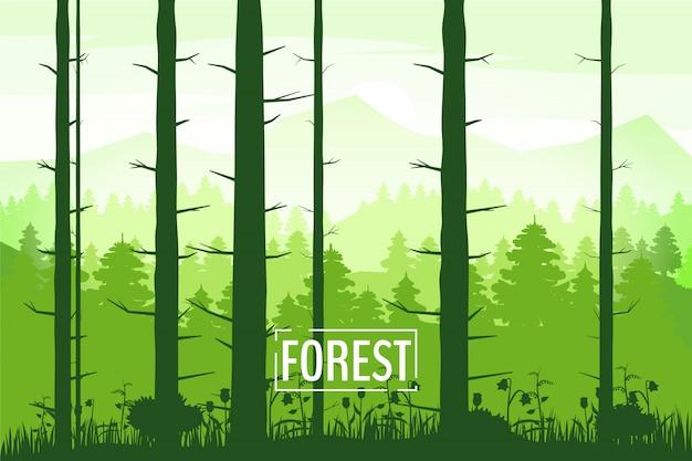 Schöne landschaftsschattenbilder des frühlinges von baumstämmen, grüne farbe des laubs
