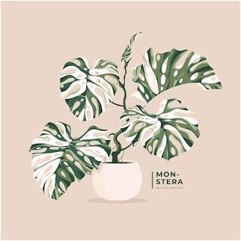 Schöne monstera variegata verlässt illustrationshintergrund