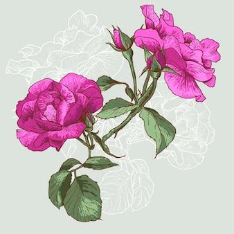 Schöne nahtlose rose
