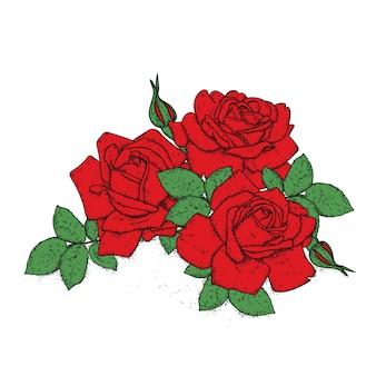 Schöne rote rosen
