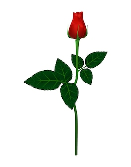 Schöne rotrose für valentinsgrußtage, vektorillustration