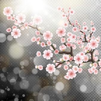 Schöne sakura blumen.