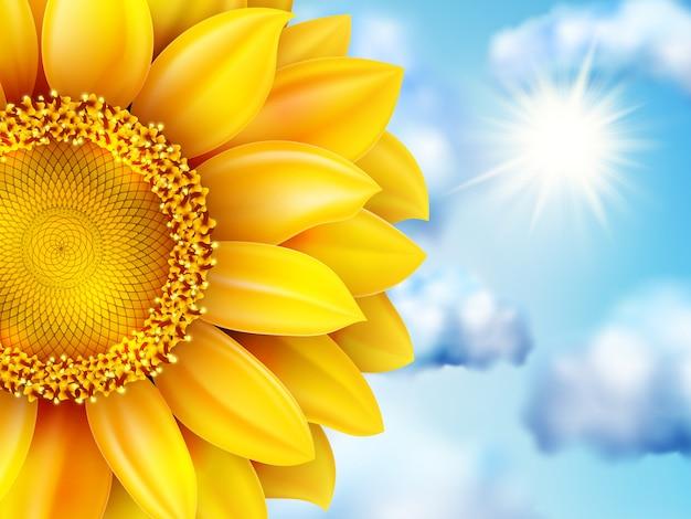 Schöne sonnenblume gegen blauen himmel.
