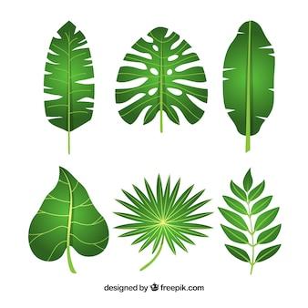 Schöne tropische blattsammlung mit flachem design