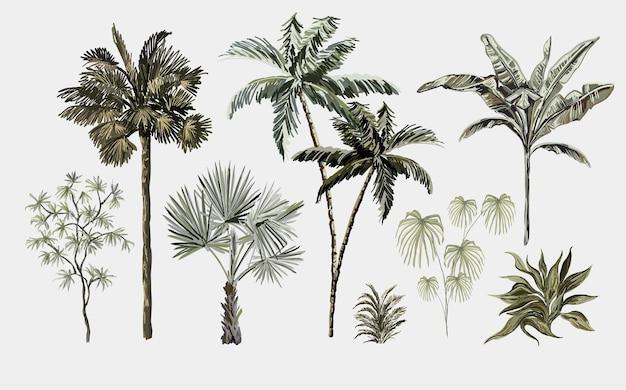 Schöne tropische vintage-pflanzen blumenclipart exotischer botanischer druck