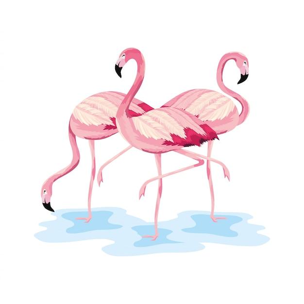 Schöne wilde tiere der tropischen flamingos