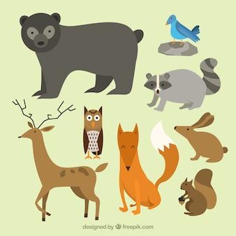 Schöne wilde tiere